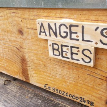Angel's Bees