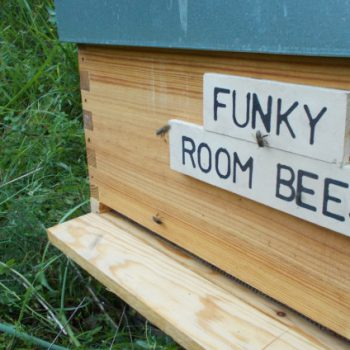 Funky Room Bees